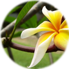 Small_1540324174-exotic_flower