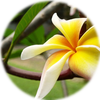 Small_1540322730-exotic_flower