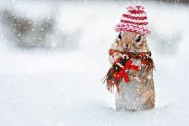 squirrel wearing snow hat while it is snowing