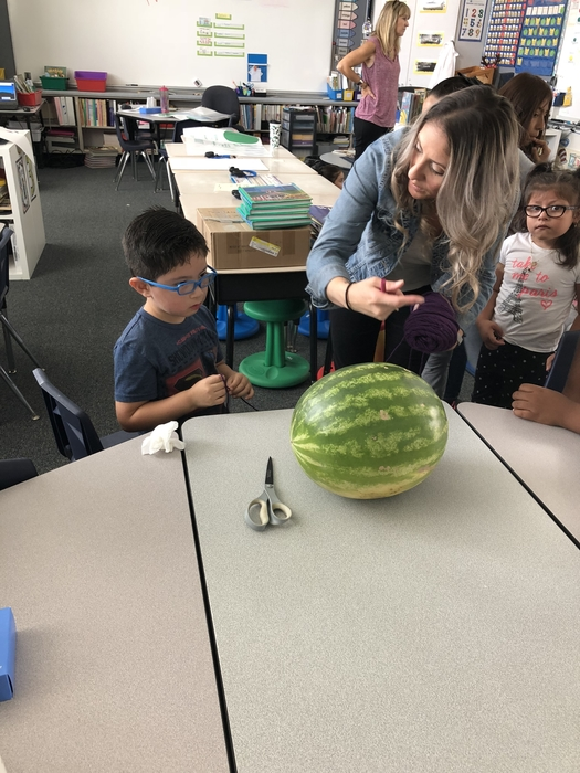 Measuring watermelons!